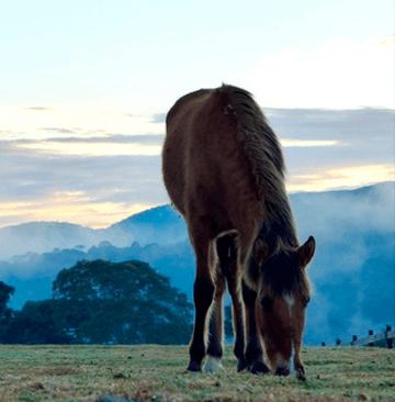 Veludo no campo - Urubici - Serra Catarinense