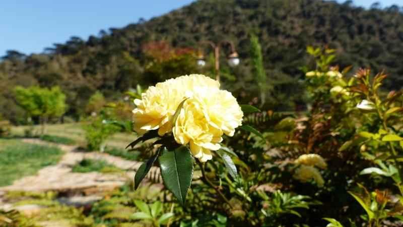 Rosa - Urubici | Serra Catarinense